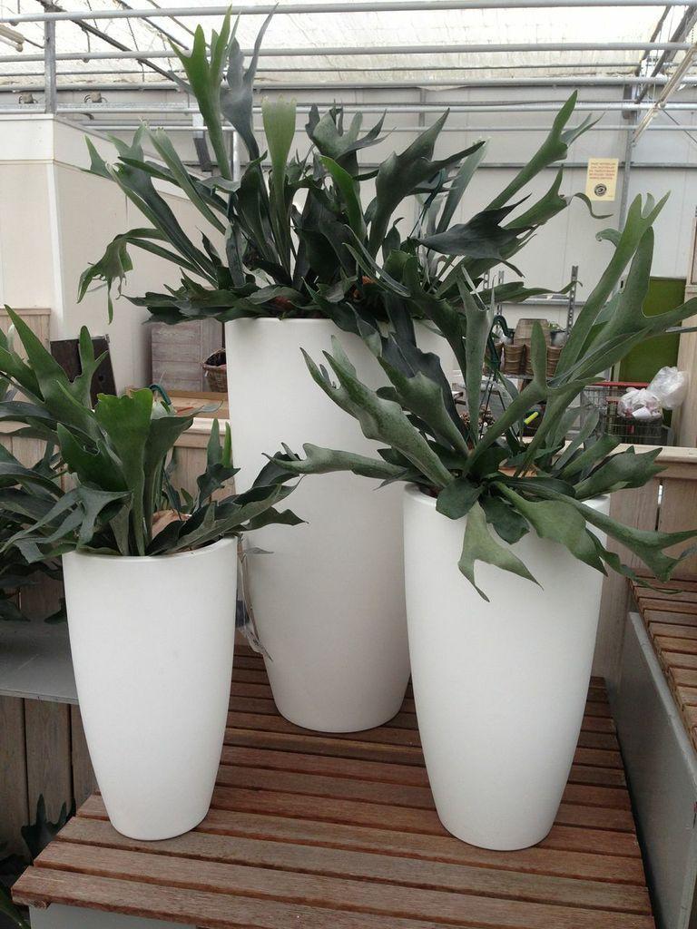 Grote kamerplanten  Grote plantenbakken  Chicplants