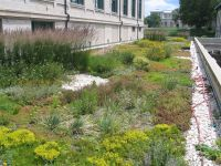 Image result for extensive green roof   Green Roof ...