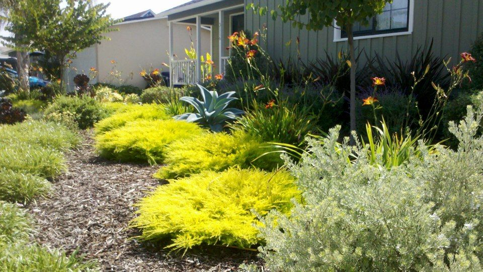 Turf Removal Rebate Drought Friendly Landscape Landscapes