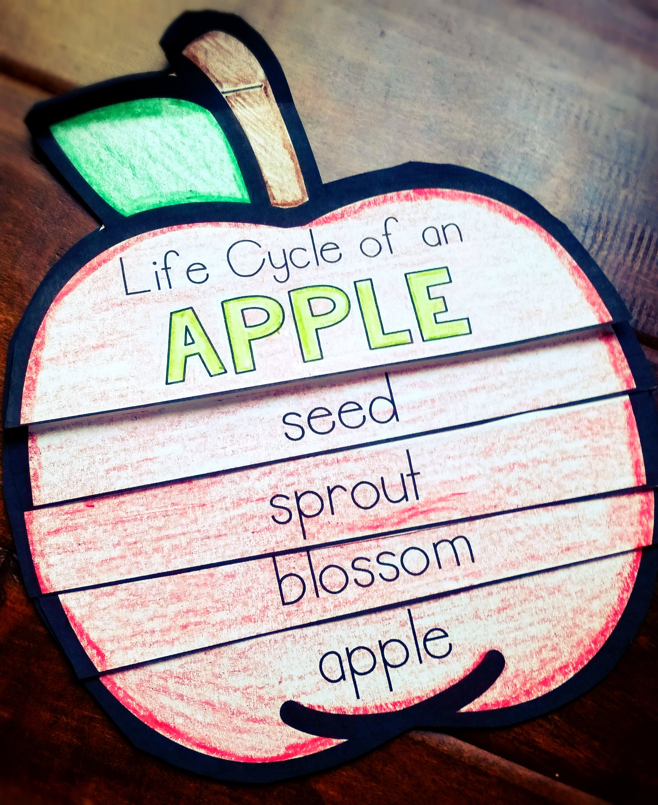 Apples Apple Life Cycle Flip Book