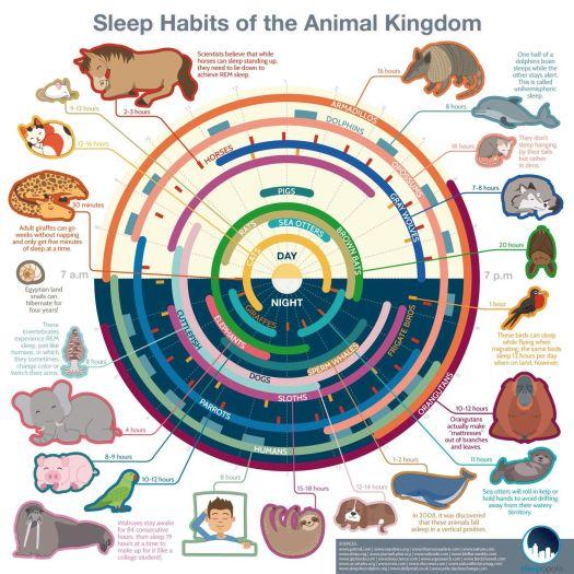 Sleep Habits of the Animal Kingdom #Infographic