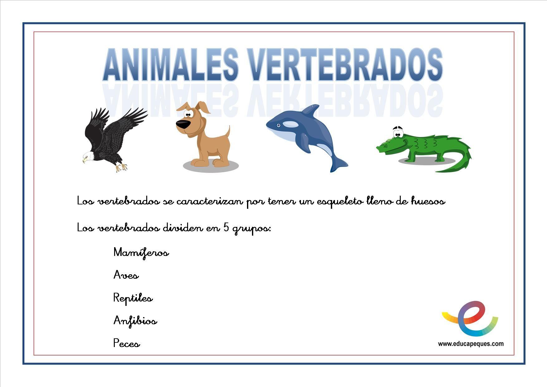 Todos Los Animales Vertebrados Tienen Una Caracteristica