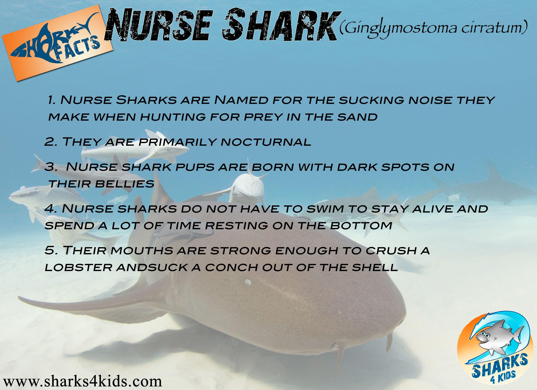 Nurse Shark Facts For Kids