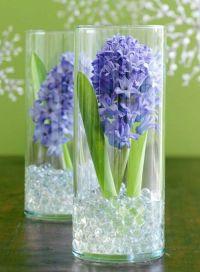 Blumenzwiebeln im Glas mit Dekosteinen,Hyazinthe ...
