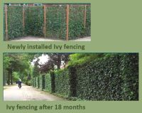 Buy Ivy Screen Fencing Panels by Wholebuild - Wholebuild ...