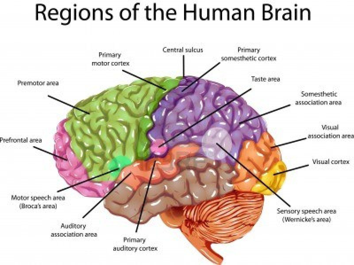 basic diagram human brain 1086 international tractor wiring did i find the quotsuper quantum quot level page 1 nursing