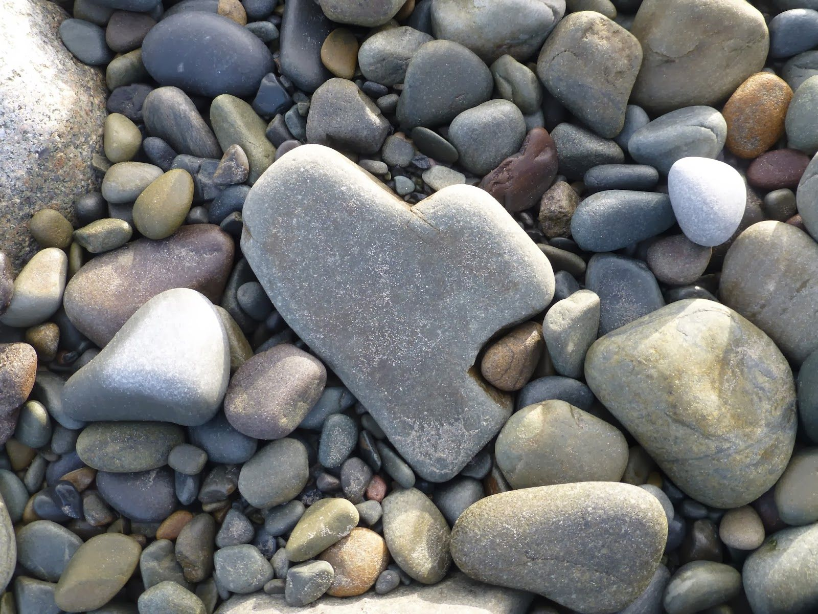 Hearts In Nature Naturally Occurring Wwwpixsharkcom