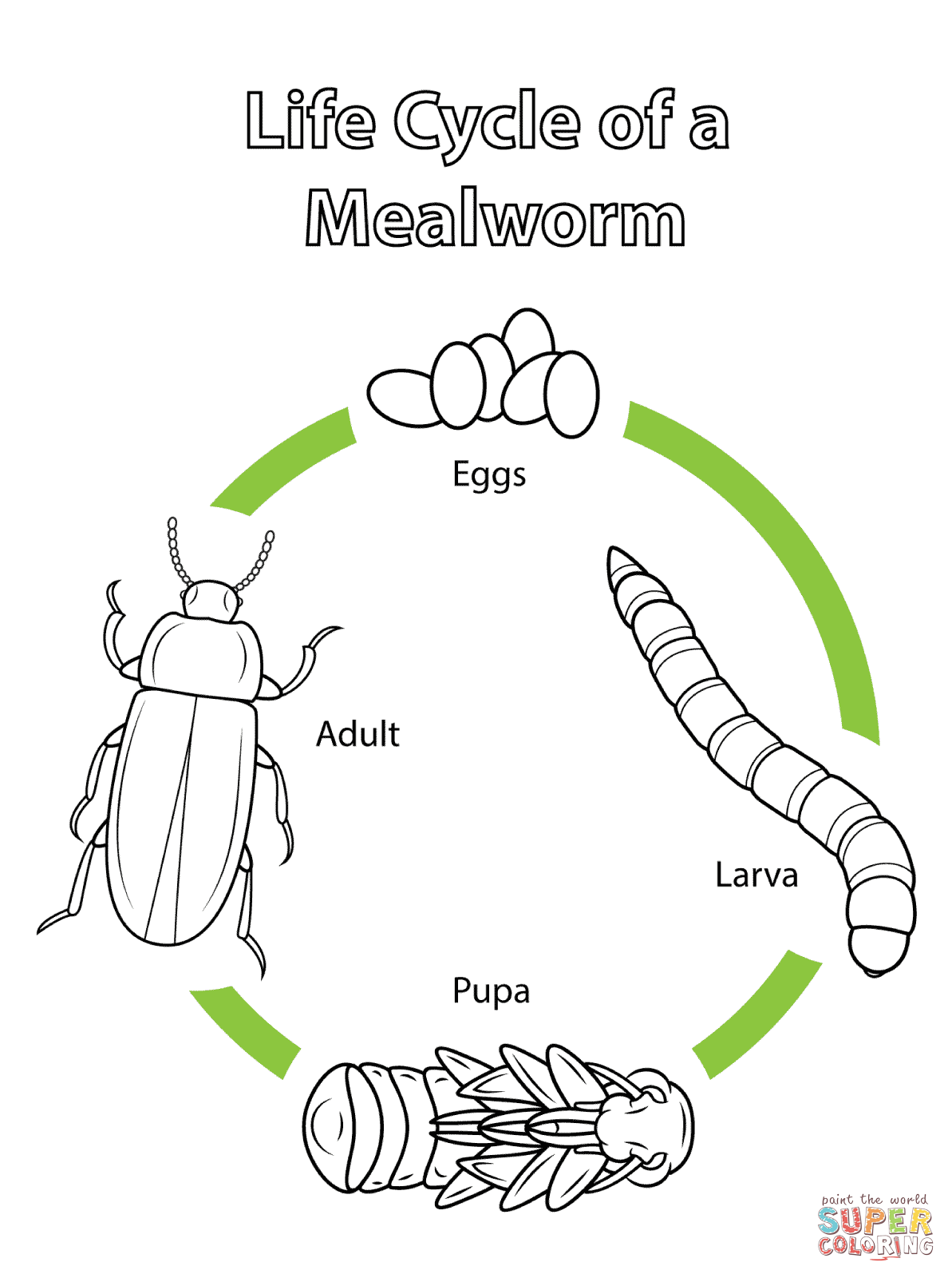 diagram of mealworm