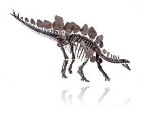 The preserved skeleton of