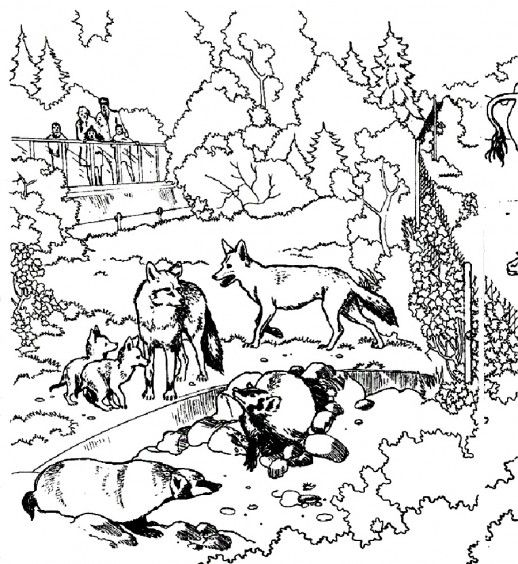 Wolves And The Other Wild Animals In A Zoo Coloring Pages