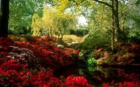 Spring Beautiful Park Scenes 1440x900 Wallpapers, 1440x900 ...