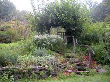 Edible Forest Garden Design