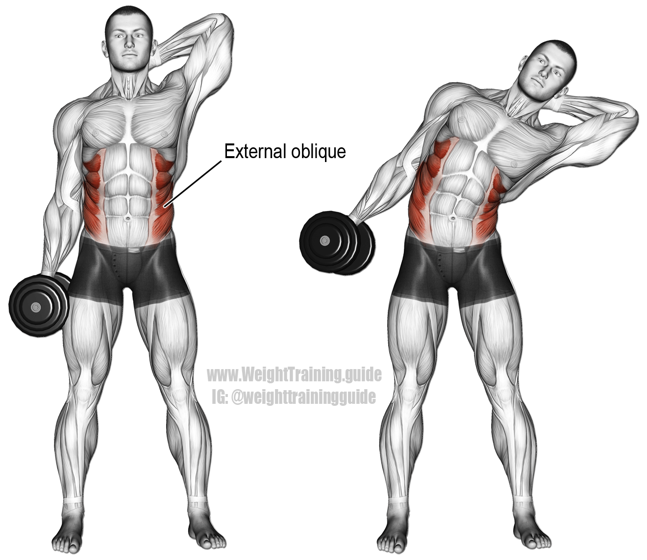Dumbbell side bend. An isolation exercise. Target muscles