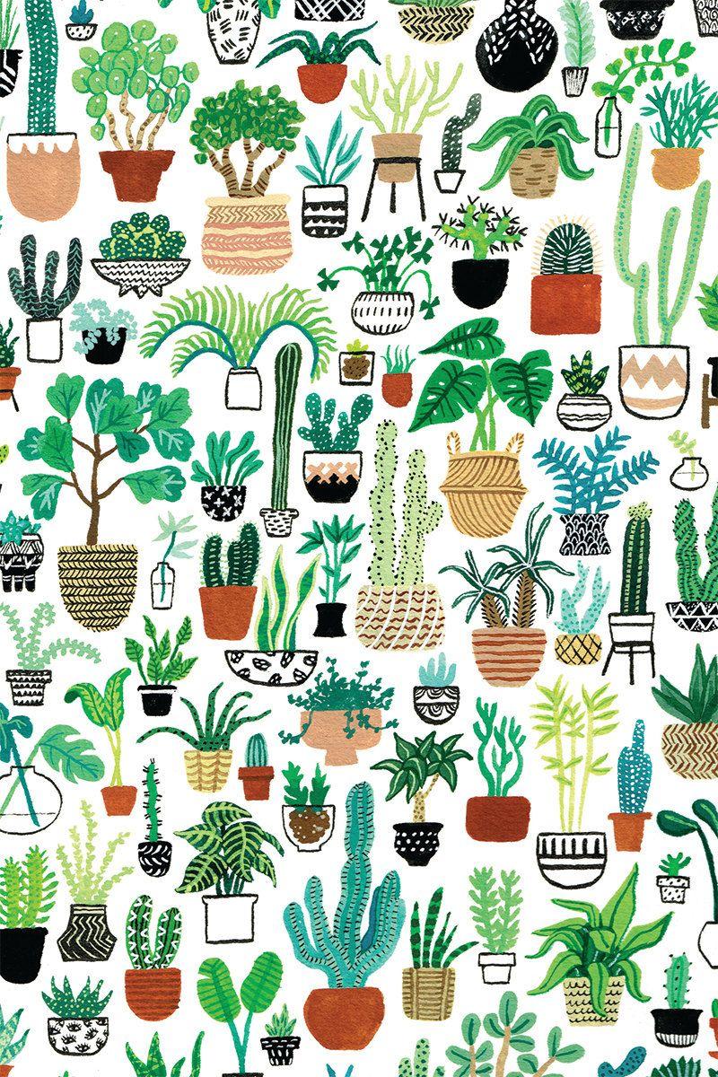 Succulent Desktop Backgrounds Cute