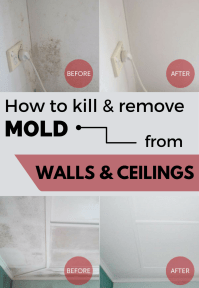 How To Kill & Remove Mold From Walls And Ceilings ...