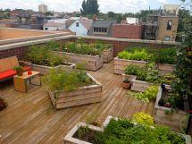 City Rooftop Vegetable Garden Designed Botanical