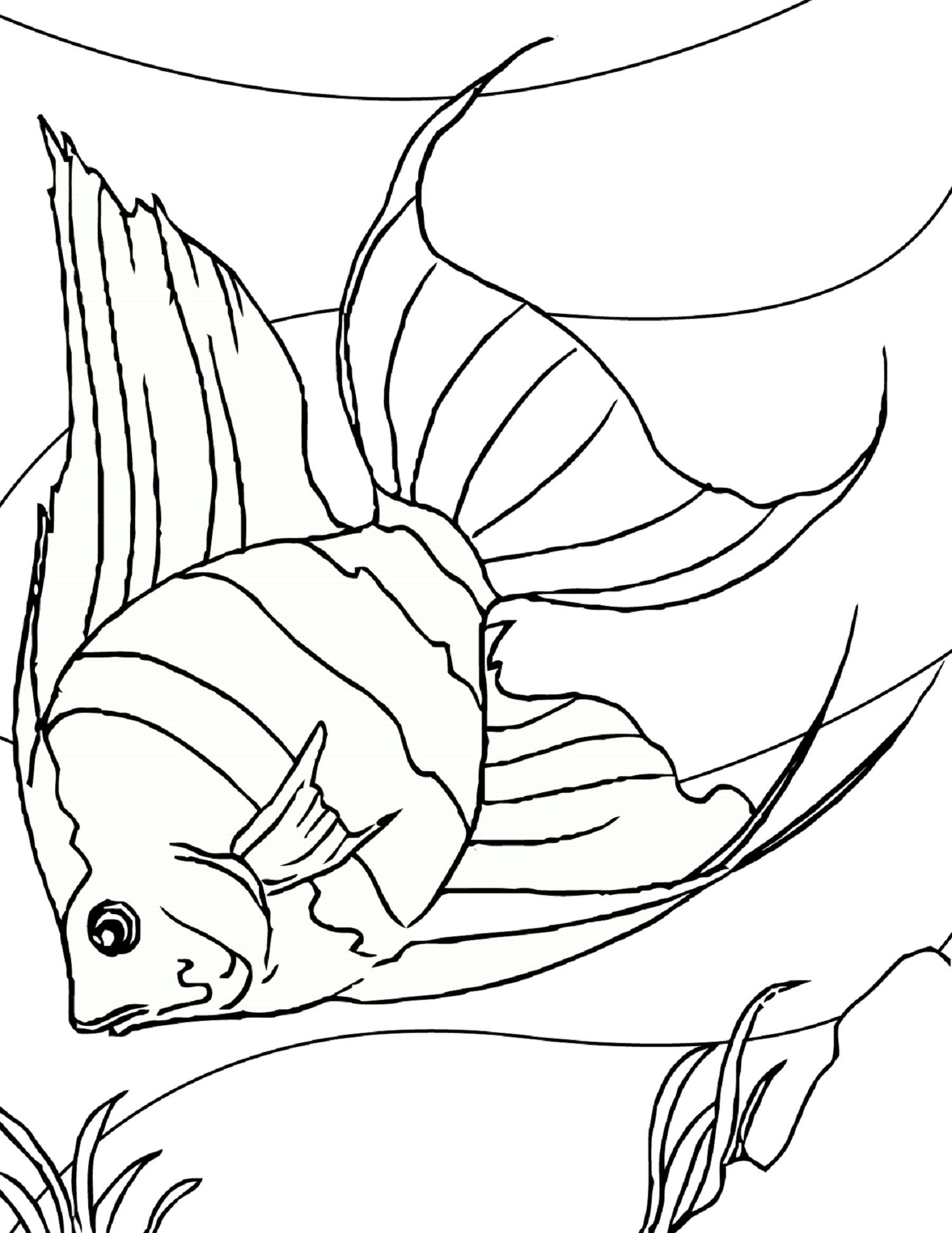 Fish Coloring Page For Aquatic Pet Coloring