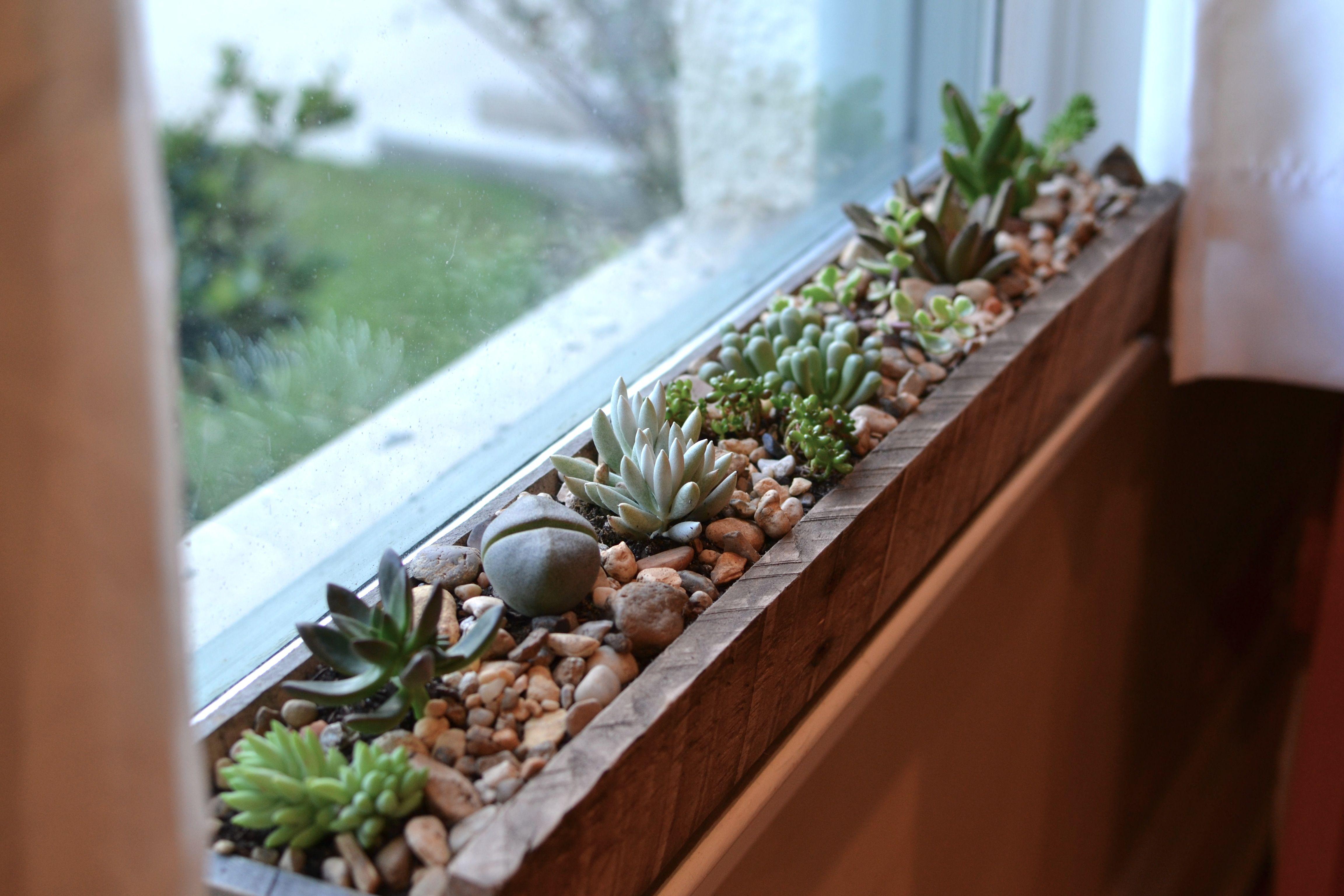 Windowsill Succulent Garden Gardens Fabulosa And Window
