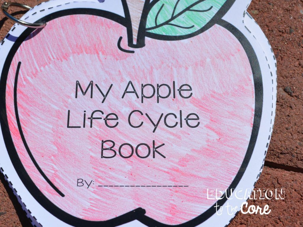 Apple Life Cycle Activities For Kindergarten And First