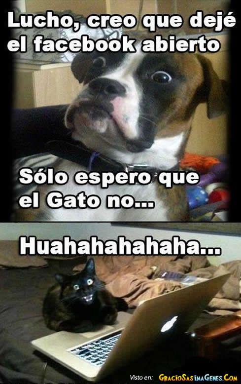 How Say Ate Spanish