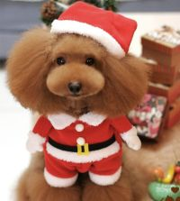 Santa Claus Christmas Pet Dog Costume with Hat | Pet dogs ...