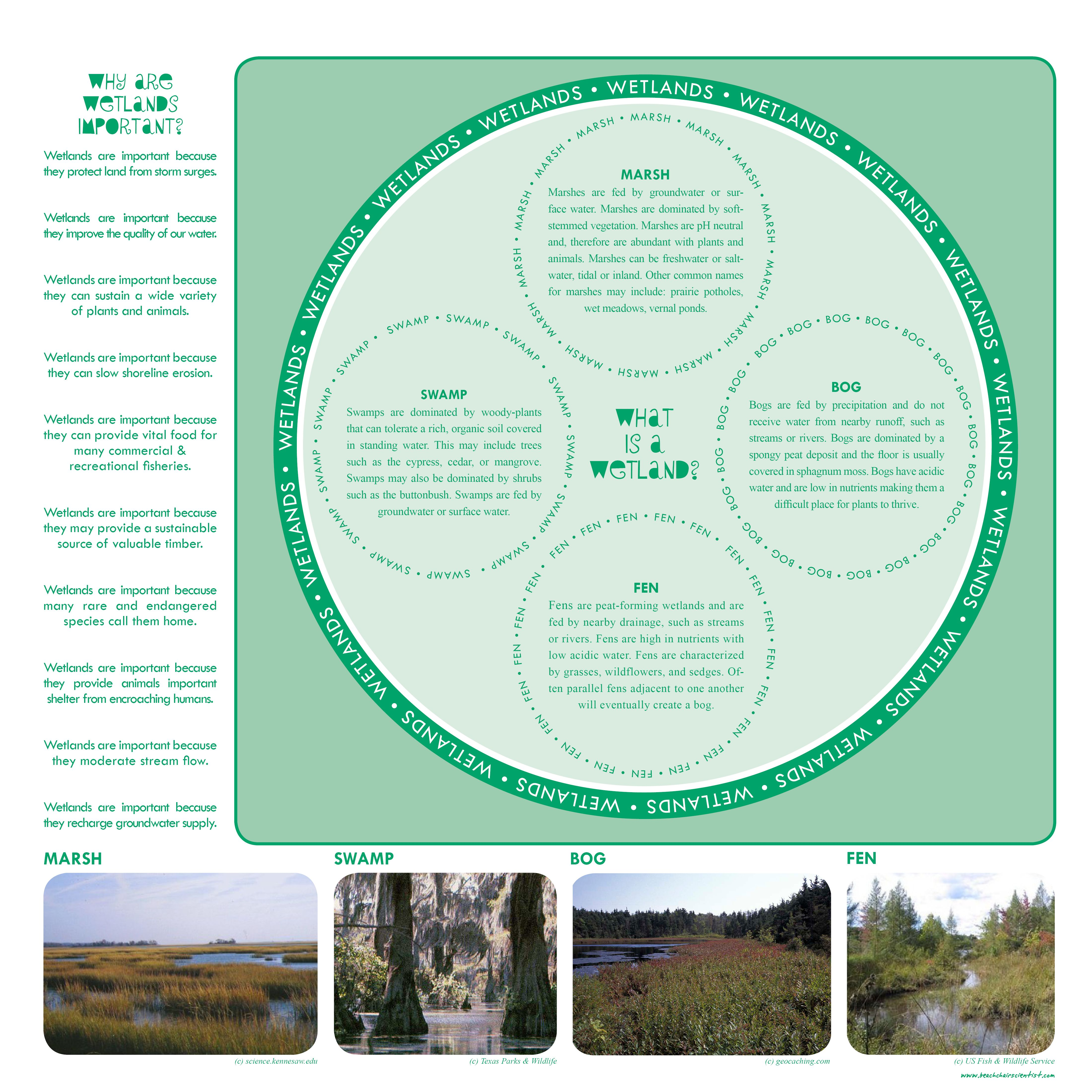 Wetlands Nice List Of Why Wetlands Are Important And The