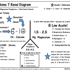 Liver Panel Diagram 5 Pin Trailer Wiring This Is The Seventh Of My Series Explaining Renal