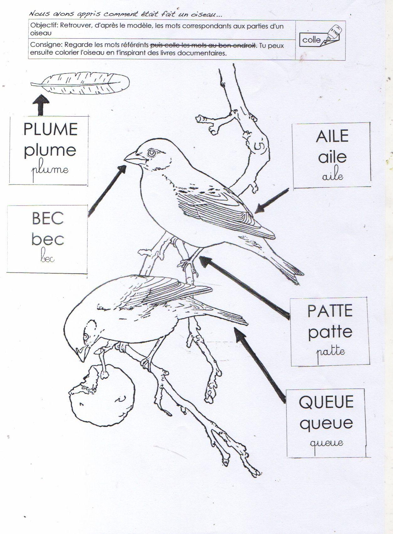 Le Vocabulaire De L Oiseau Ms