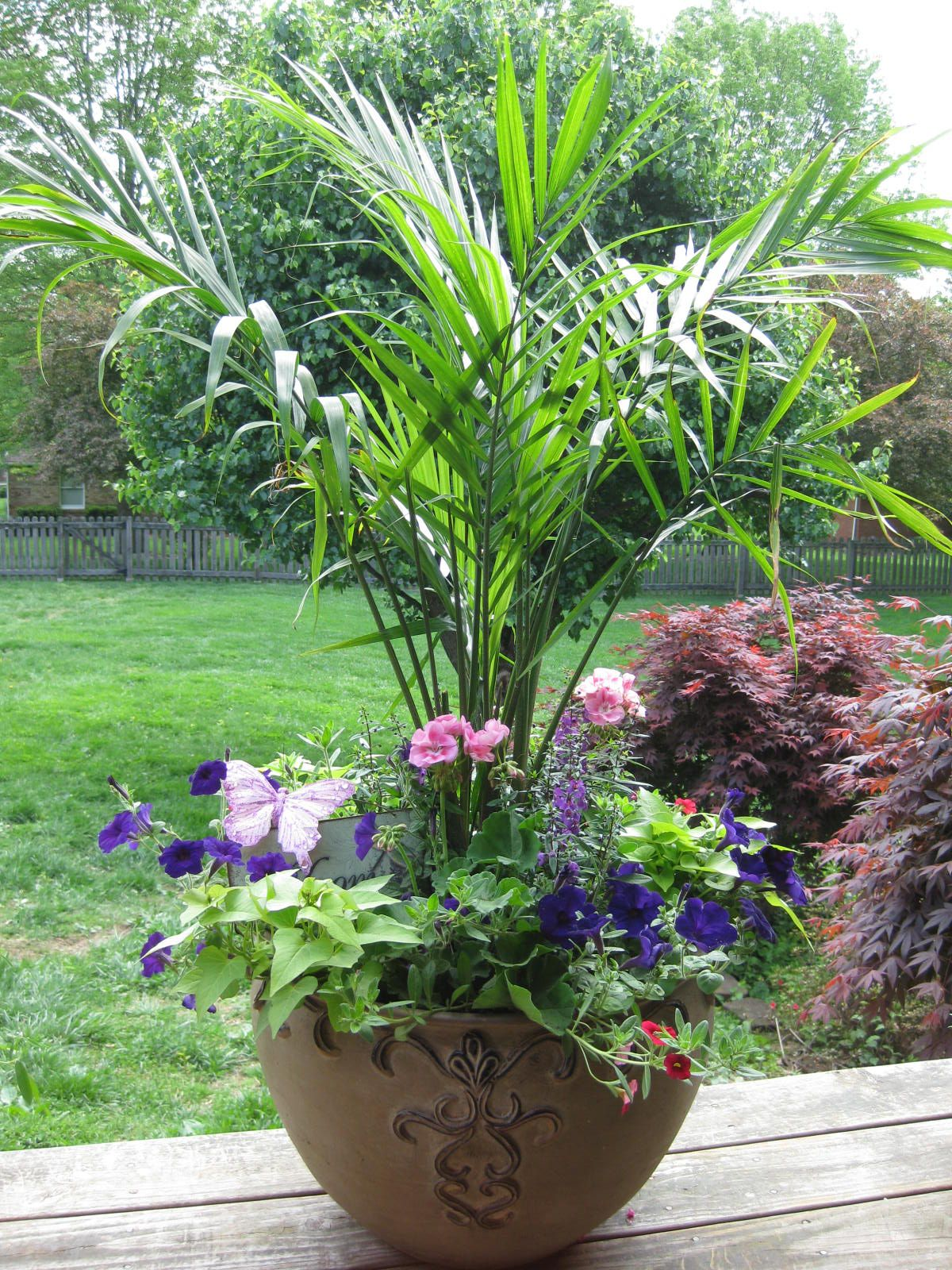 Love The Palm, Large Container Garden,  Container Gardens