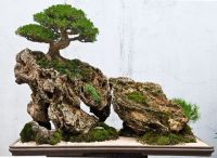 Bonsai  Landscape | Saikei and Penjing landscapes and ...