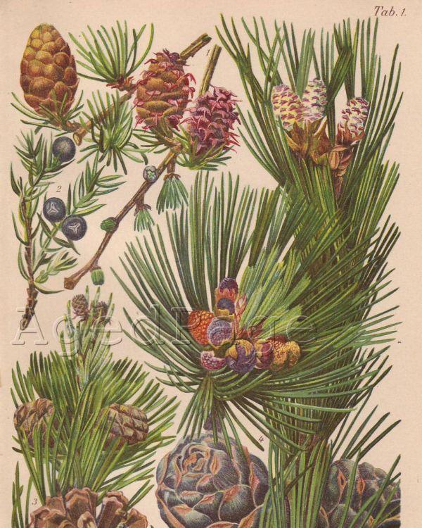 Vintage Botanical Illustration Ideas