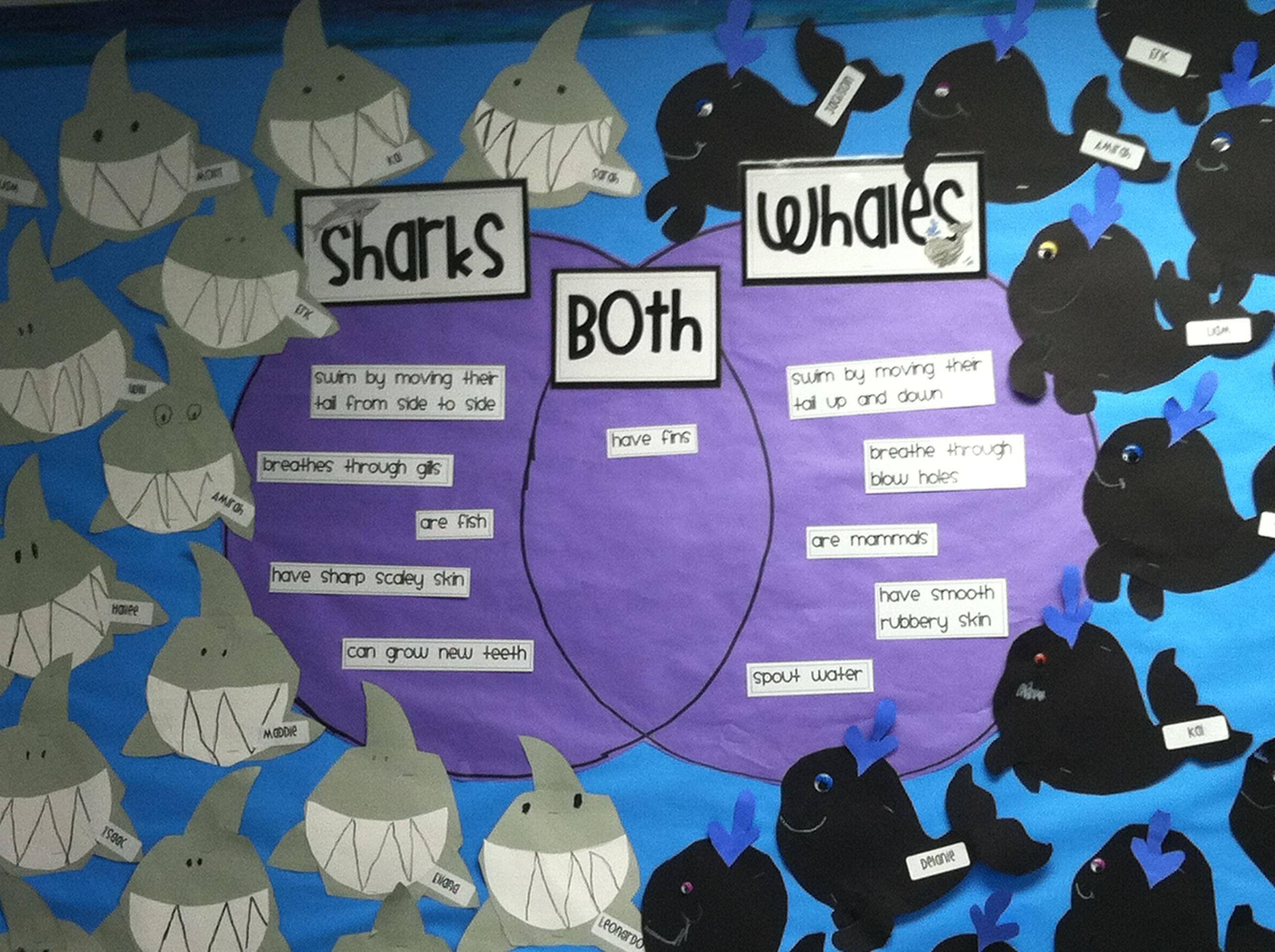 venn diagram bulletin board 2000 honda civic ex wiring whale and shark ocean pinterest sharks