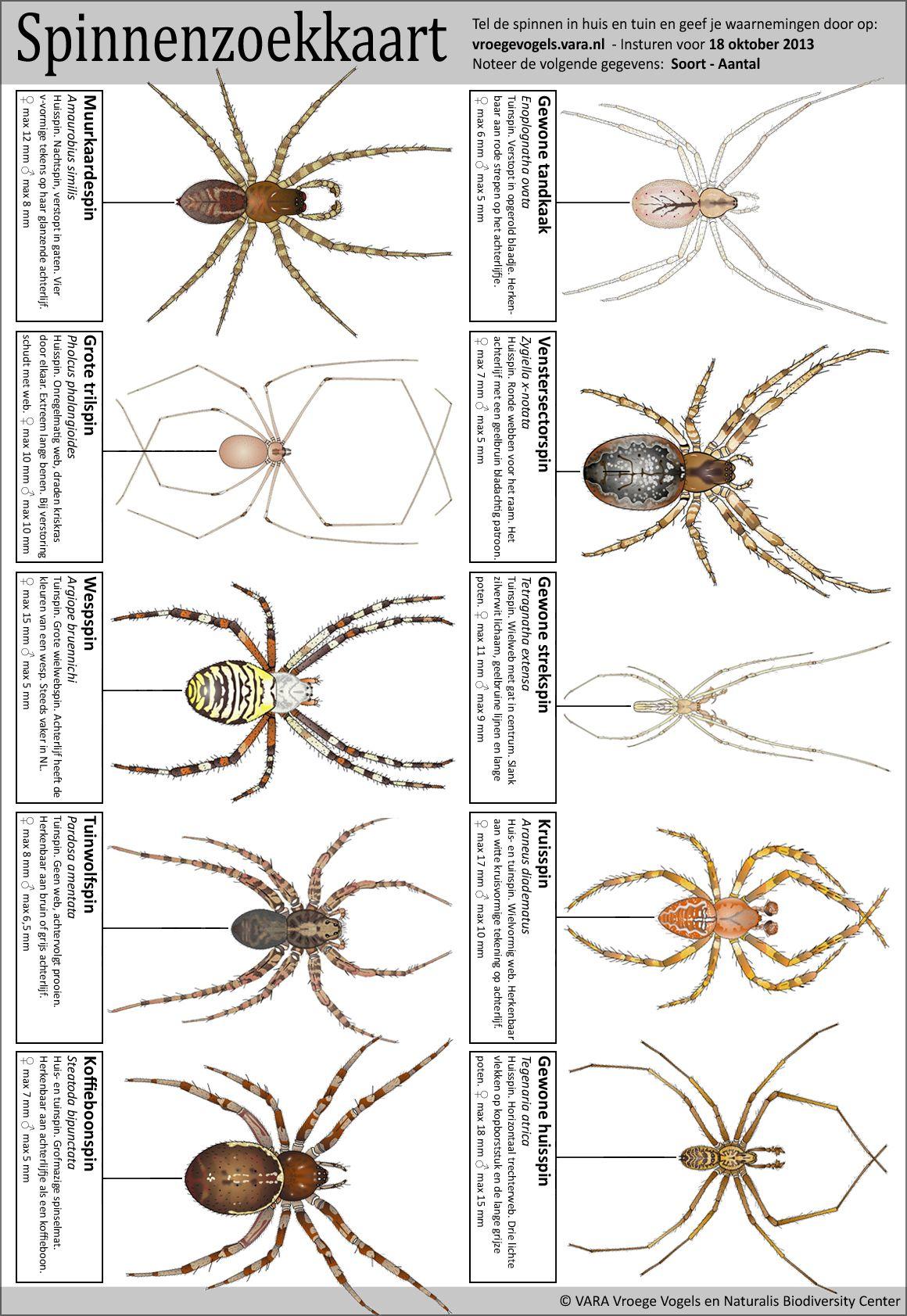 Halloween Spider Cut And Paste Worksheet