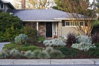 drought tolerant yards california - Google Search ...