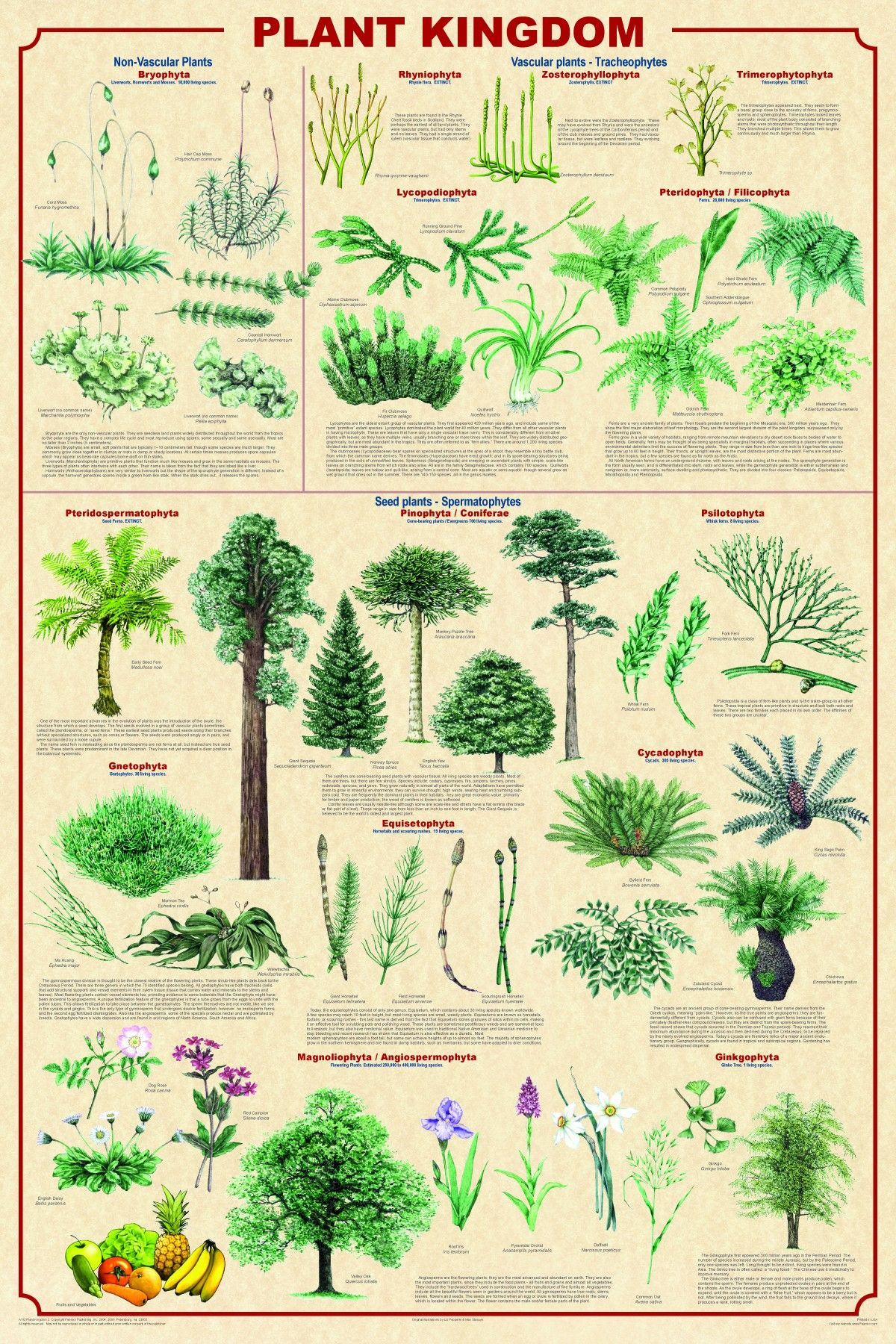 An Infographic Defining The Plant Kingdom