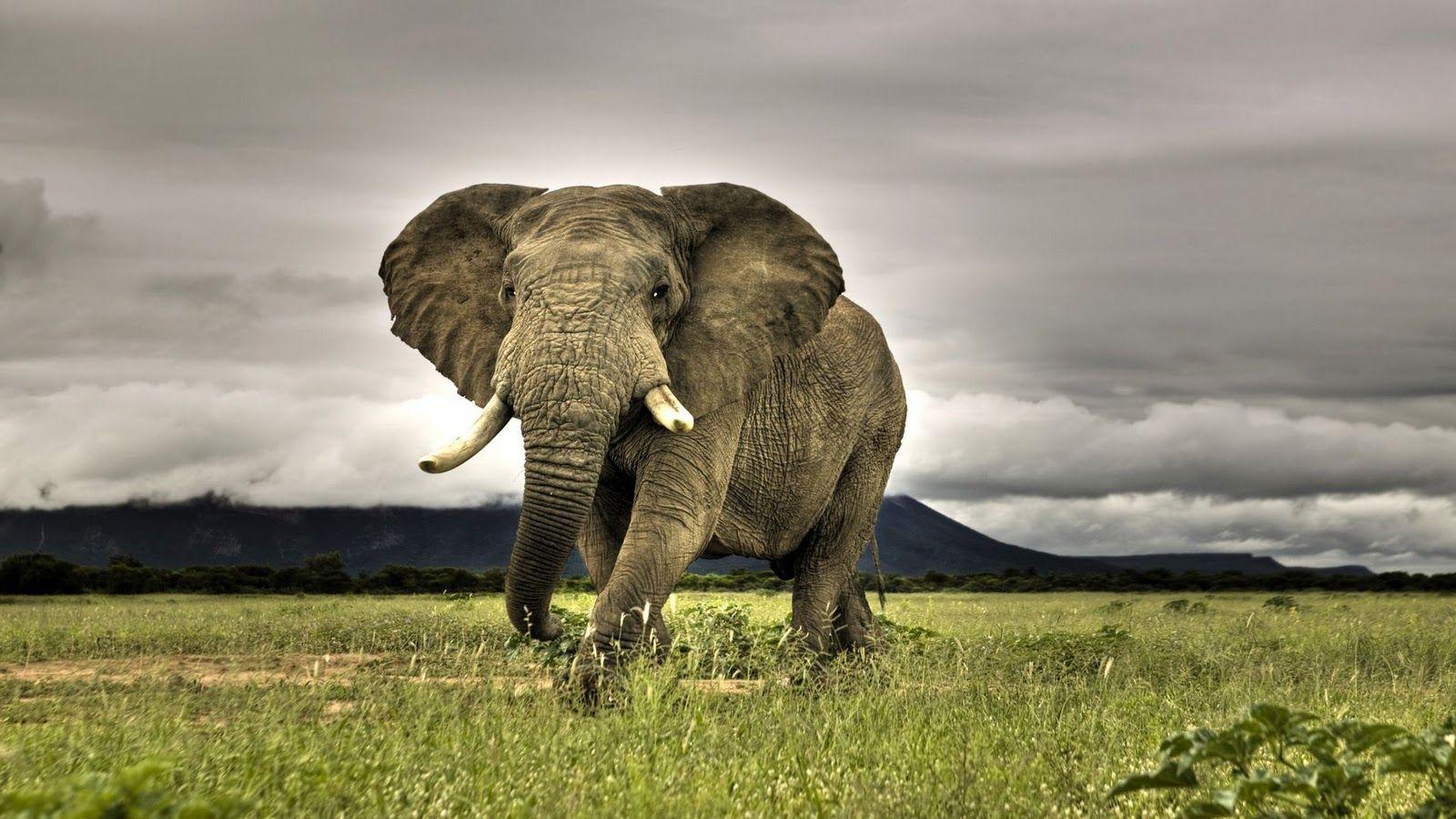 hd wildlife wallpapers   grrr~animals   pinterest   wildlife