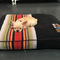 Pendleton dog/pet bed   Animals   Pinterest  