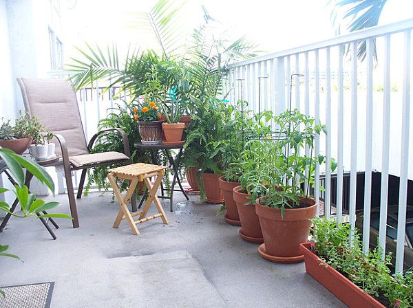 Balcony Gardens Prove No Space Is Too Small For Plants Gardens