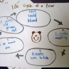 Brown Bear Diagram 1990 Toyota Corolla Engine Life Cycle Of A Grizzly | Kindergarten! Pinterest Kindergarten