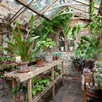 Best 25+ Gothic garden ideas on Pinterest | Black flowers ...