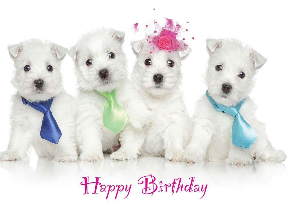 Birthday Card Westie Party Pups Dog Puppy Mum Sister