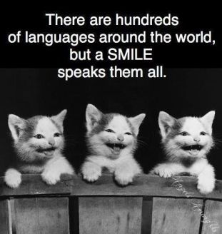 Image result for there are a hundred languages in the world but a smile speaks them all with animals