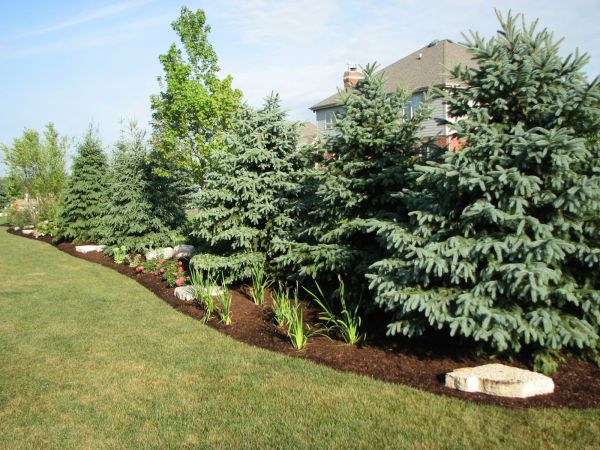 front yard privacy landscaping