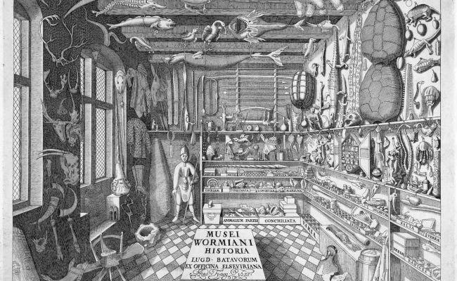 Ole Worm Copenhagen 1588 1655 From Ole Worm Museum