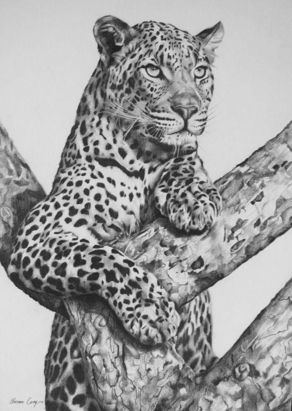 Leopard Pencil Drawing