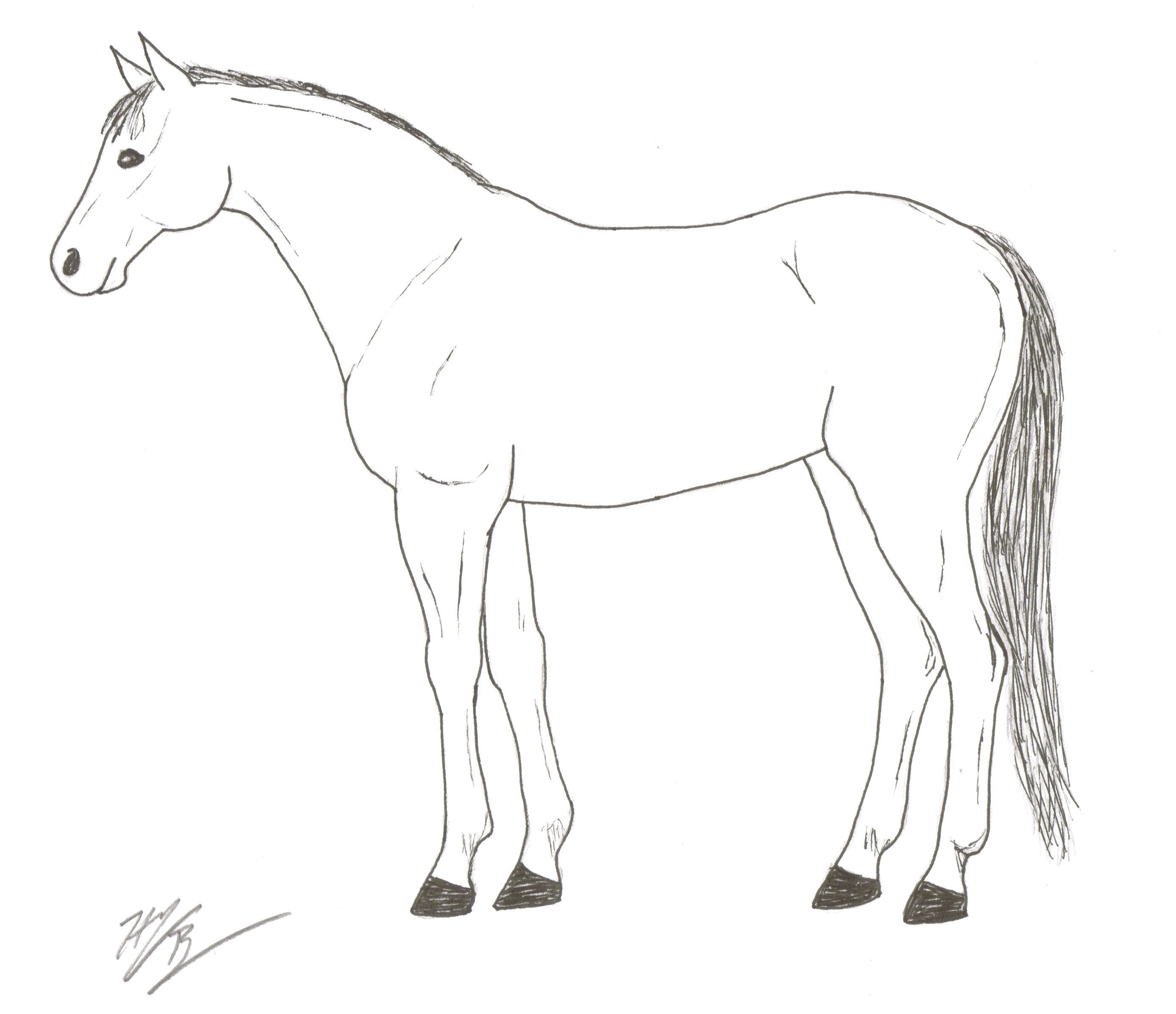 Horse Body Parts Printable Worksheet Sketch Coloring Page