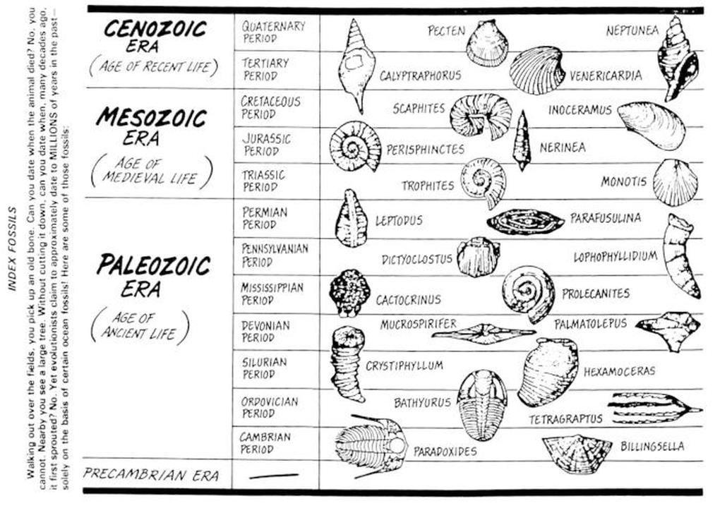 index-fossils-14f9675812d0e90e4ee.jpg (1020×727