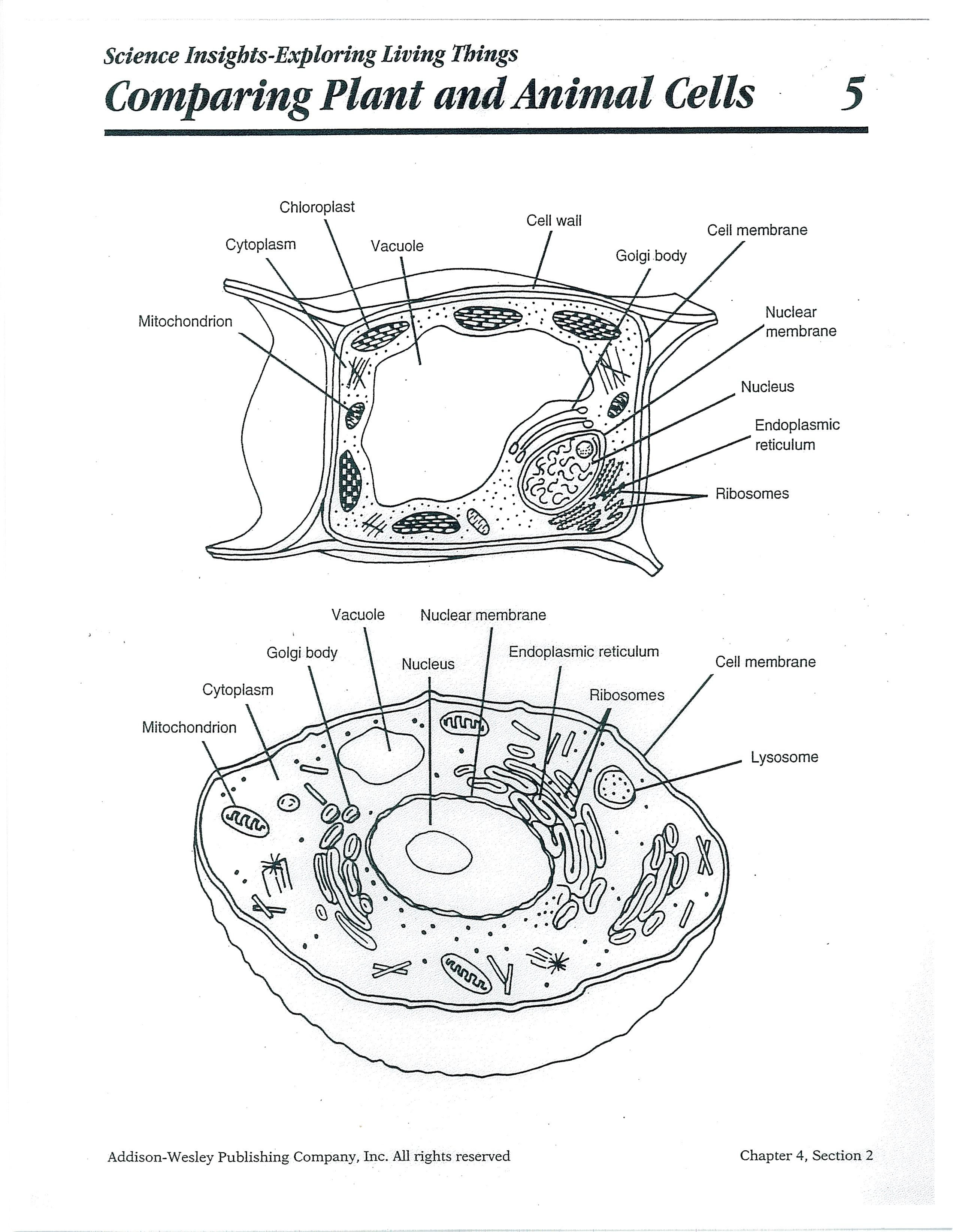 animal cell blank diagram to fill in 2002 chevrolet silverado radio wiring printable plant and