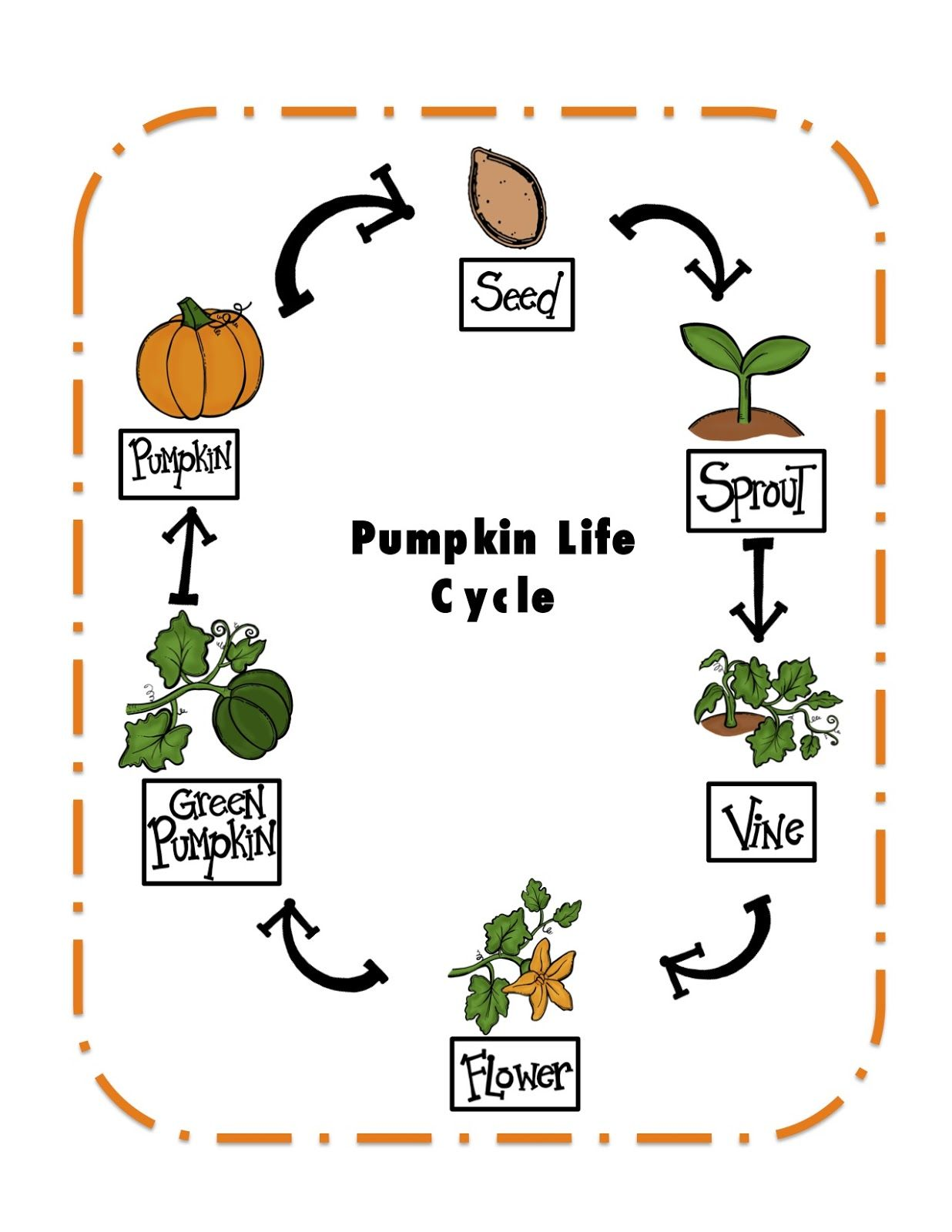 Preschool Printables Pumpkin Life Cycle Printable