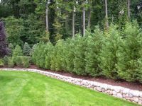Truesdale Landscaping | Best Trees and Plants for Privacy ...